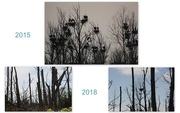6th Jun 2018 - After the devastation.