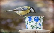 6th Jun 2018 - Look who popped in for tea