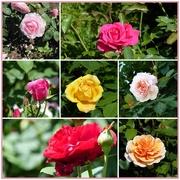 6th Jun 2018 - Rose Gardens