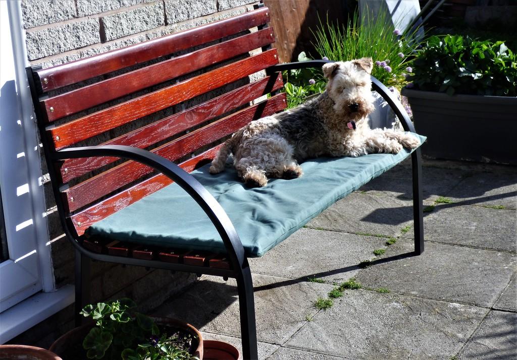 A chance to sun bathe !! by beryl
