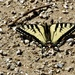 butterfly on the beach by amyk
