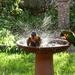 Splish Splash by onewing