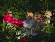 7th Jun 2018 - In the evening in a rose garden