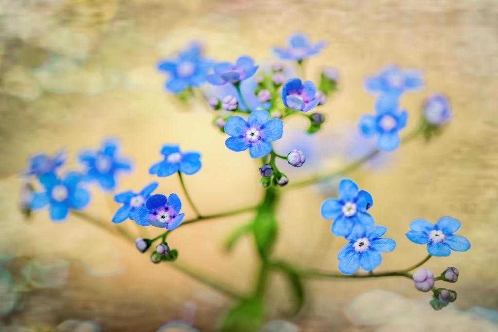 Pretty Flowers in the Garden by taffy