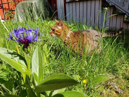 Jungle cat  by katriak