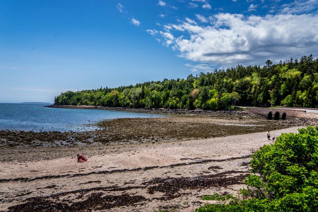 Acadia National Park - Maine Coastline by cdonohoue