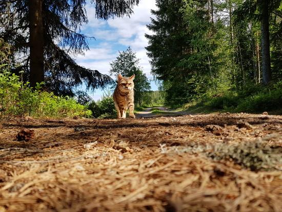 Explorer cat by katriak
