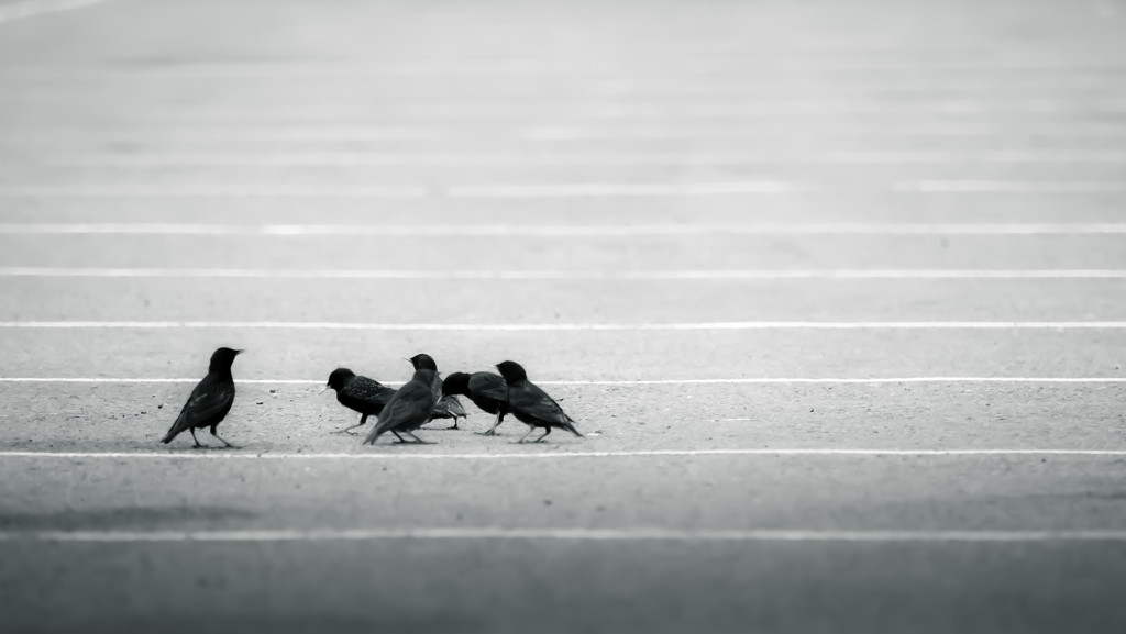 staying between the lines by northy