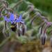 Bee in burago