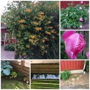 10th Jun 2018 - Time for the garden