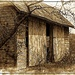 Rustic Barn in Sepia