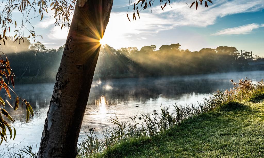 Foggy by golftragic