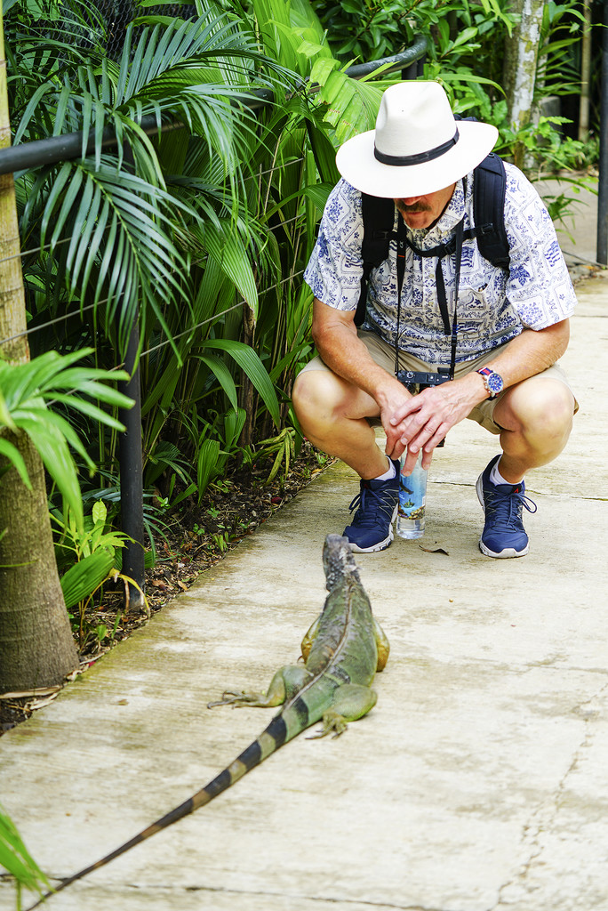 """Hola Hombre Guapo... Hablas Iguana?"" * by Weezilou"