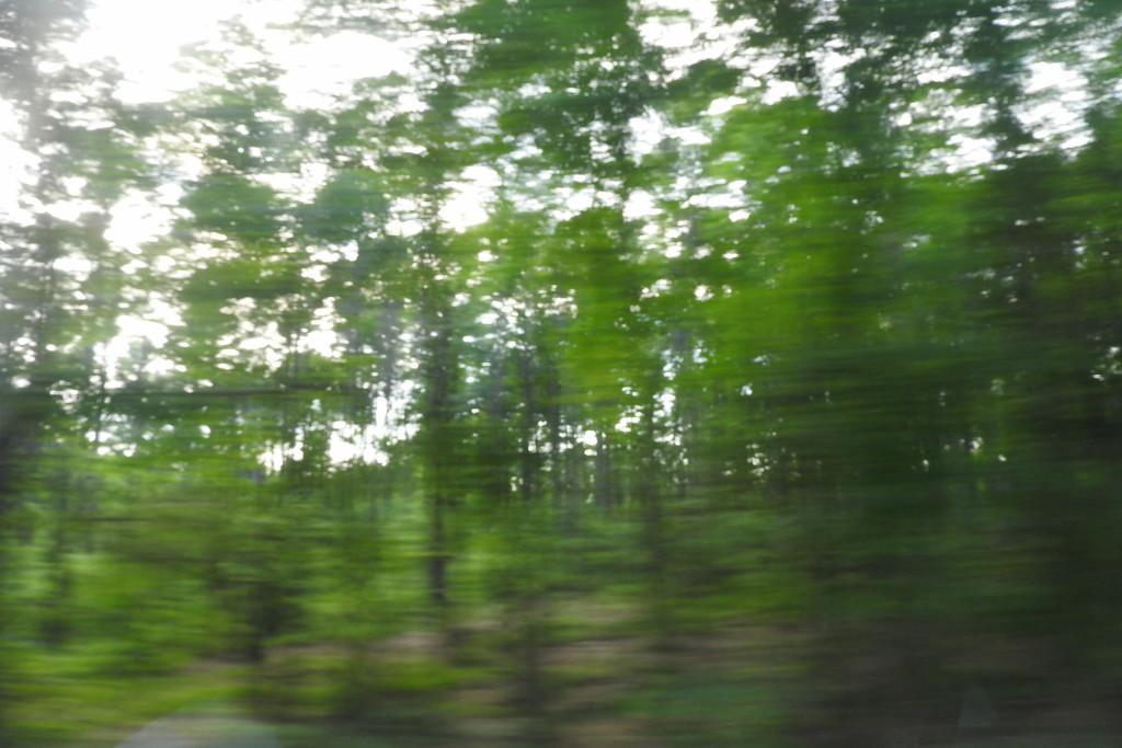 Summer is speeding by by homeschoolmom