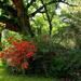 Live oaks and azaleas
