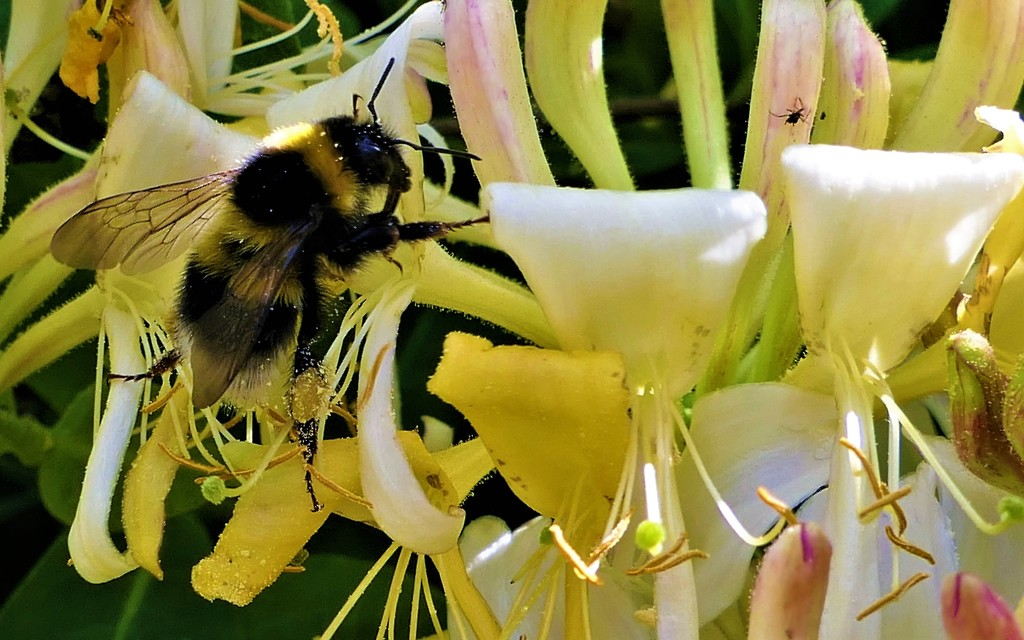 Busy, Buzzy Bee by carole_sandford