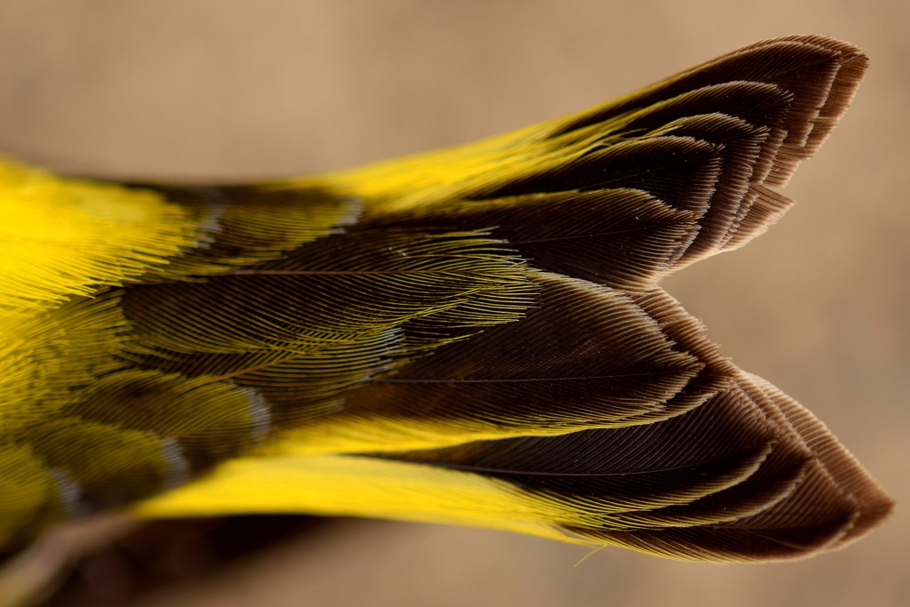 feather detail by christophercox