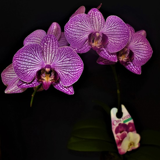 Orchid Minding For A Friend ~ by happysnaps