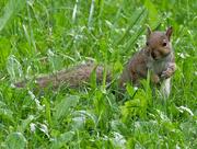 11th Jun 2018 - squirrel landscape