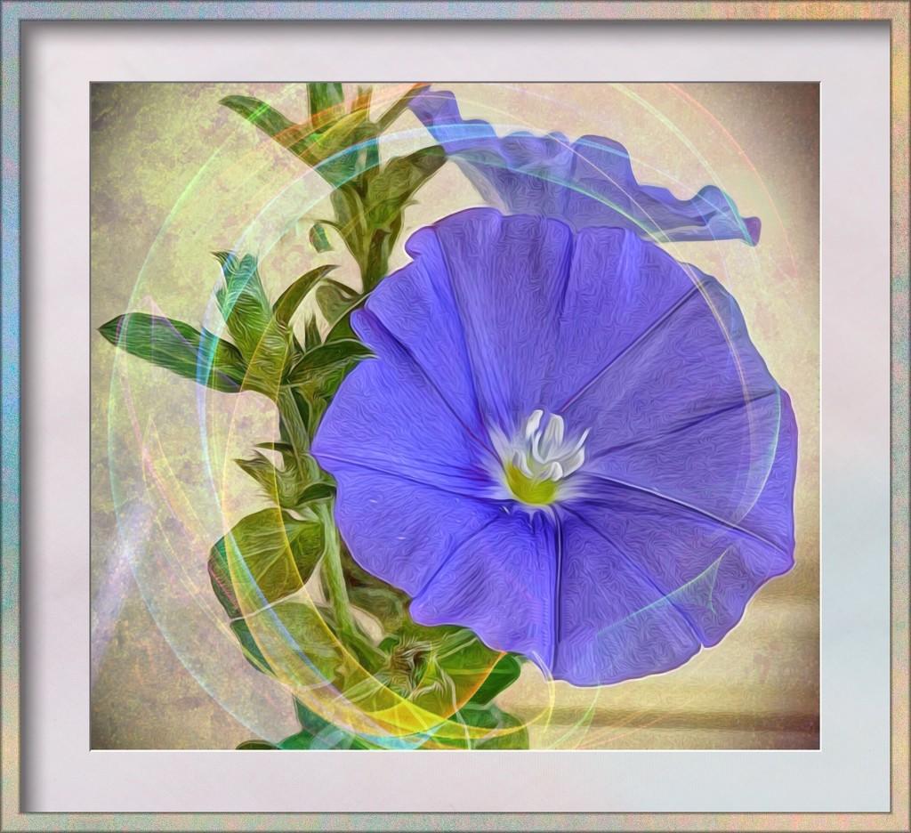 Convulvus blooming again by ludwigsdiana