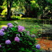 Hydrangeas at Magnolia Gardens by congaree