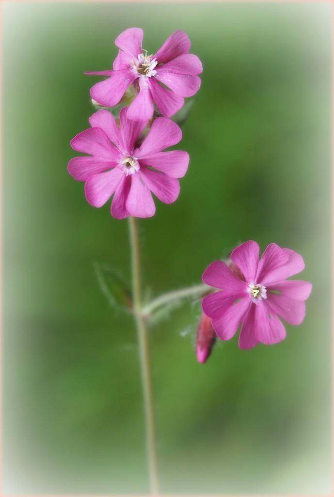 The garden is ihn full bloom. by janemartin
