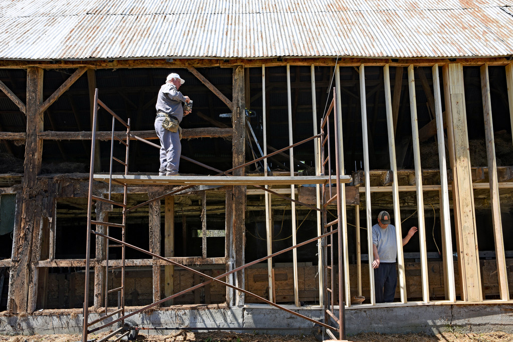 Barn Raising for the Second Time by farmreporter