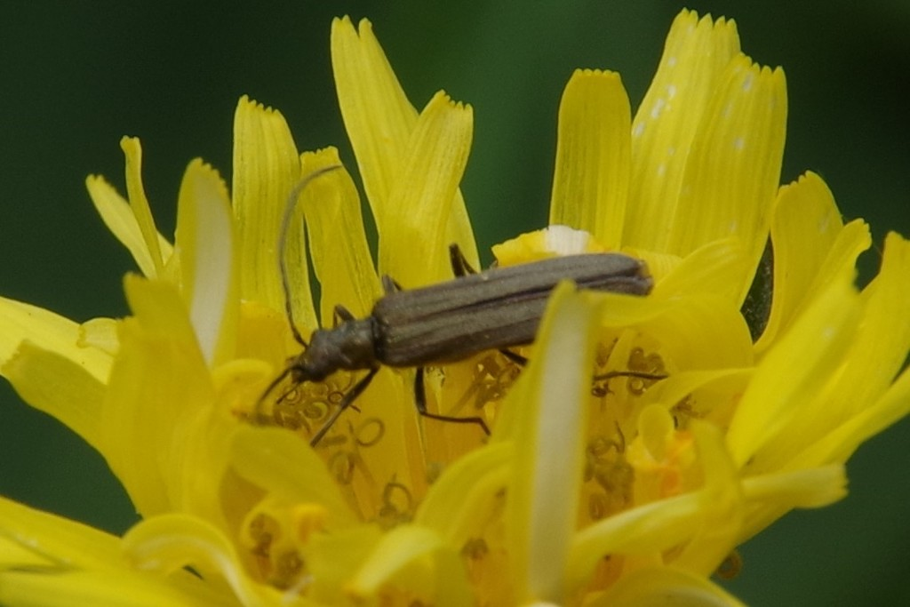 Bug Food or Weed? by 30pics4jackiesdiamond