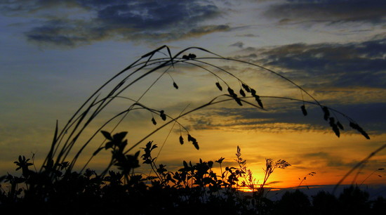 Weeds at Sunset by calm