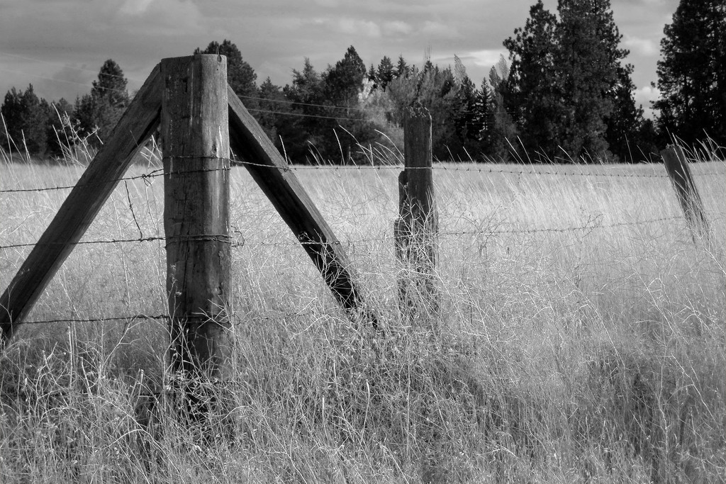 Fencepost by lsquared