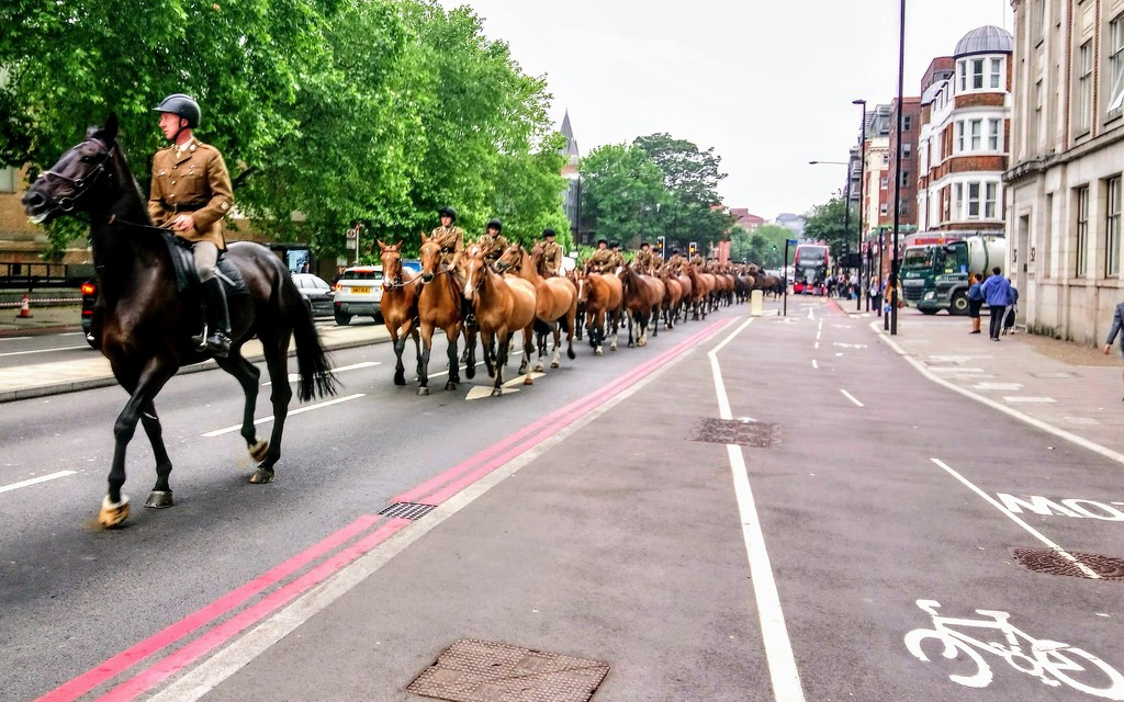 Horse parade by boxplayer