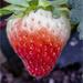 Macro Strawberry