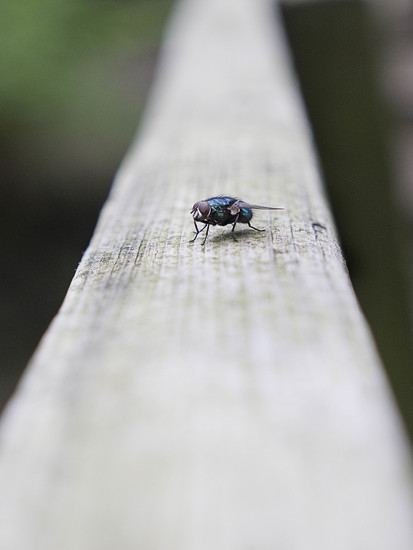 The fly on the handrail. by gamelee