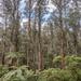 Yarra Ranges National Park scene