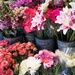 Scene from a flower shop