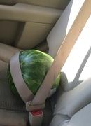 13th Jun 2018 - Secure melon