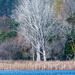 Wintery Trees by yorkshirekiwi