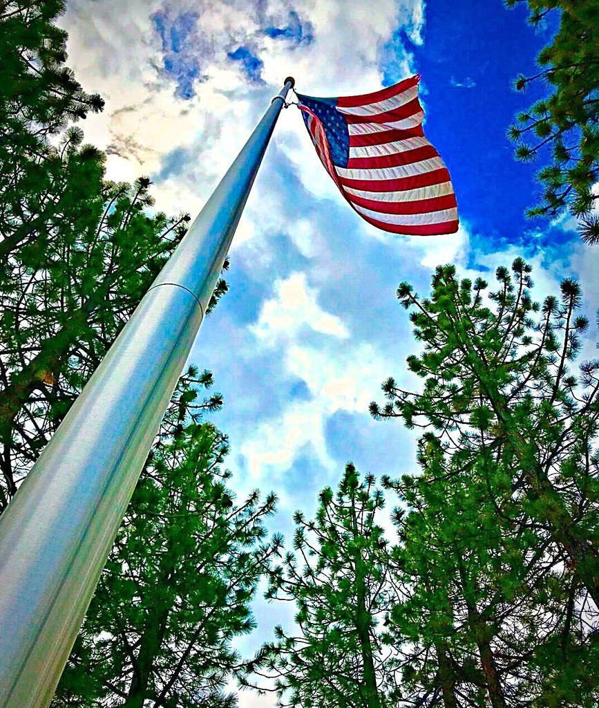 You're A Grand Old Flag  by gardenfolk