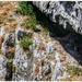 Peregrine falcons nesting at Malham Cove- zoomed in as much as I could