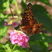 Sweet Summer Nectar by homeschoolmom
