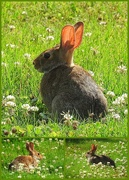 15th Jun 2018 - A bunny!