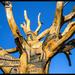 Richland White Oak