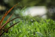 14th Jun 2018 - Sparkling Grass