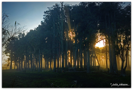 Through the Tree's by julzmaioro