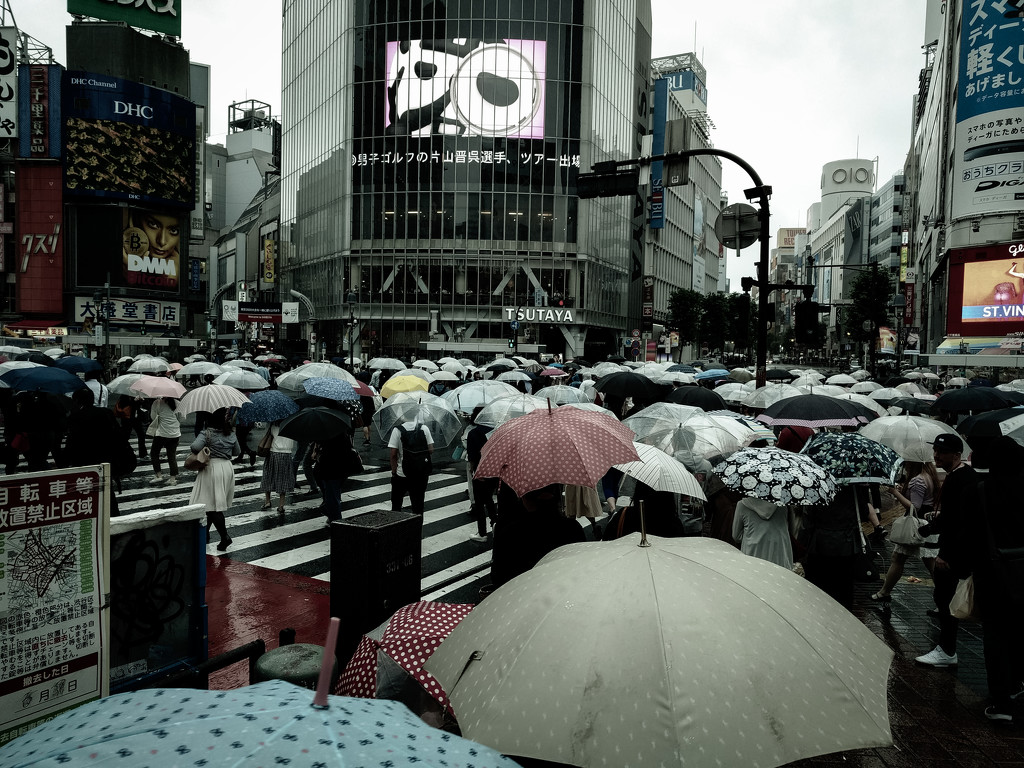 Shibuya crossing in the rain by tokyobogue