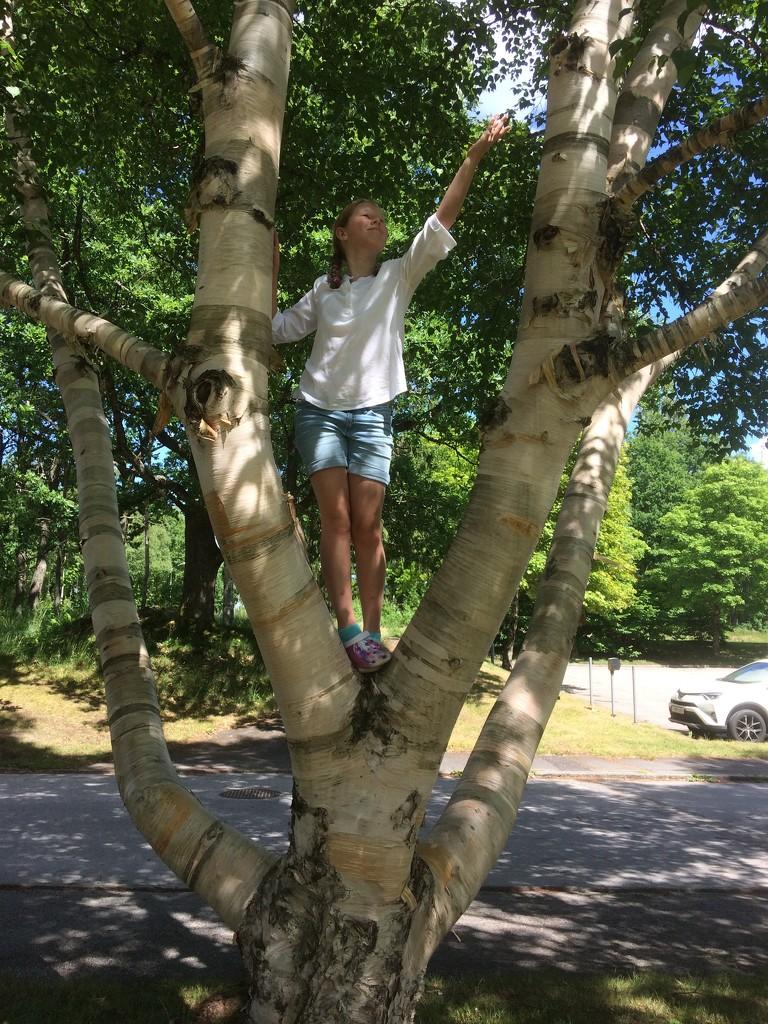 Hoo in a tree by huvesaker