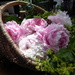 A basket of pink peony's and roses from the garden