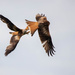 Red Kite in combat