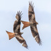Red Kite-restricted airspace
