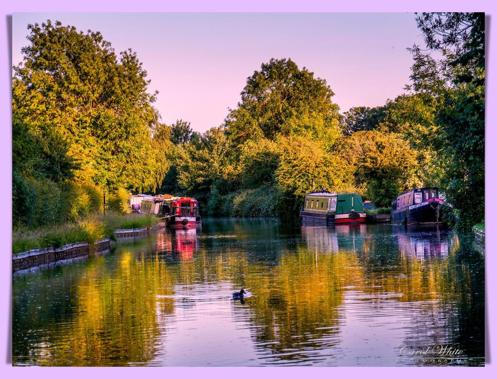 The Grand Union Canal,Bugbrooke by carolmw